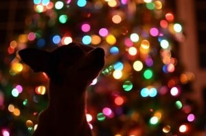 Holiday pet safety. Silhouette of dog in front of a pretty lit Christmas tree