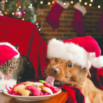 Holiday pet safety - dog steals cookie from plate