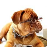 dog with glasses on is ready to be a dog writer
