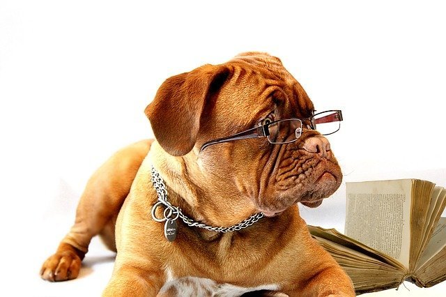 dog with glasses on is a dog writer