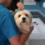 Small dog carried by vet tech – Pet Dental Health Month 2021