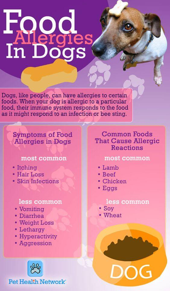 Chart shows symptoms and causes of food allergies – why is my dog so itchy but has no fleas?