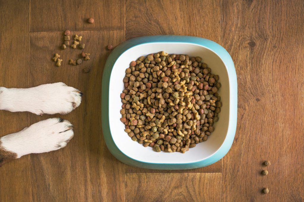 Dog food recall...bowl full of dog food with paws of a dog next to it